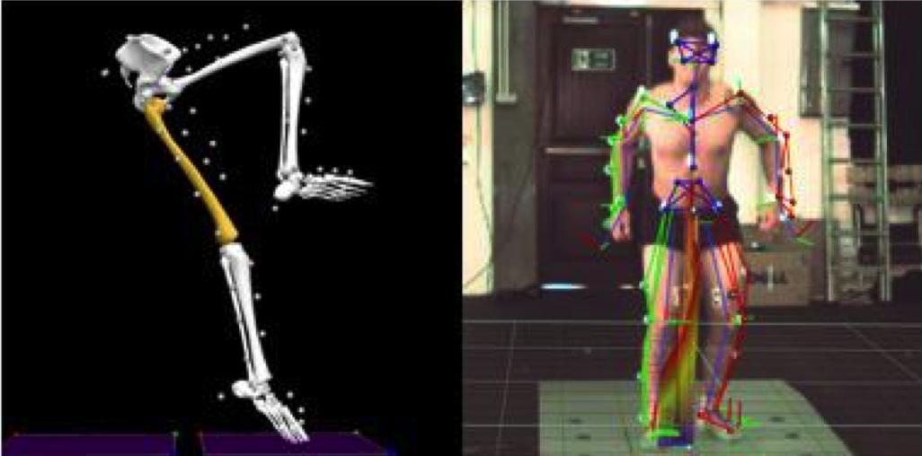 関節は様々な部位と連動して動いている